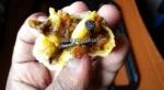 nail food