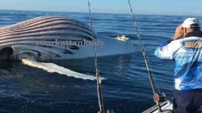 whale.jpg 1