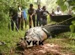 crocodile-1