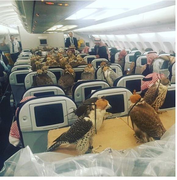 Saudi eagle